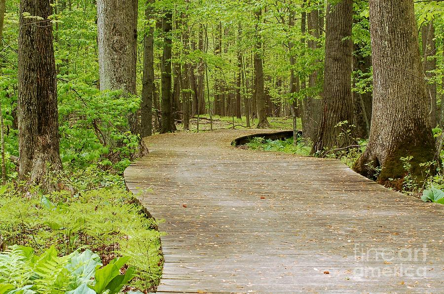 Wooden Path Photograph - The Wooden Path by Patrick Shupert