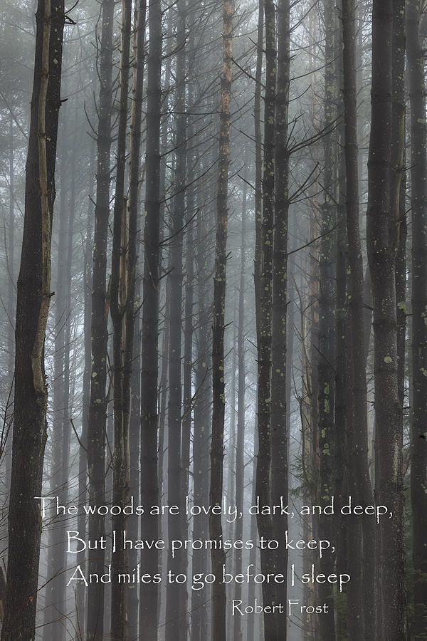 The Woods Photograph - The Woods by Bill Wakeley