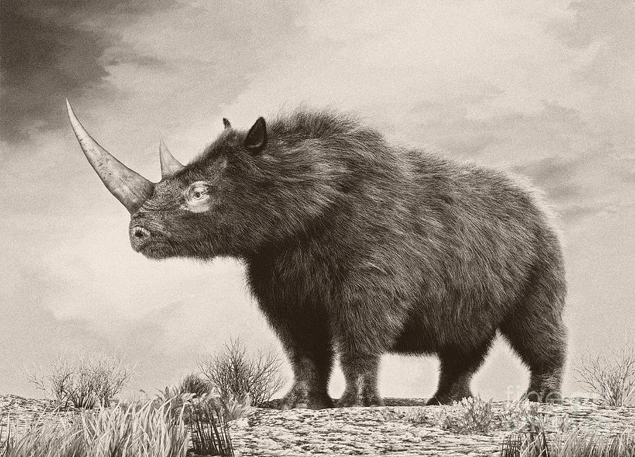 Horizontal Digital Art - The Woolly Rhinoceros Is An Extinct by Philip Brownlow