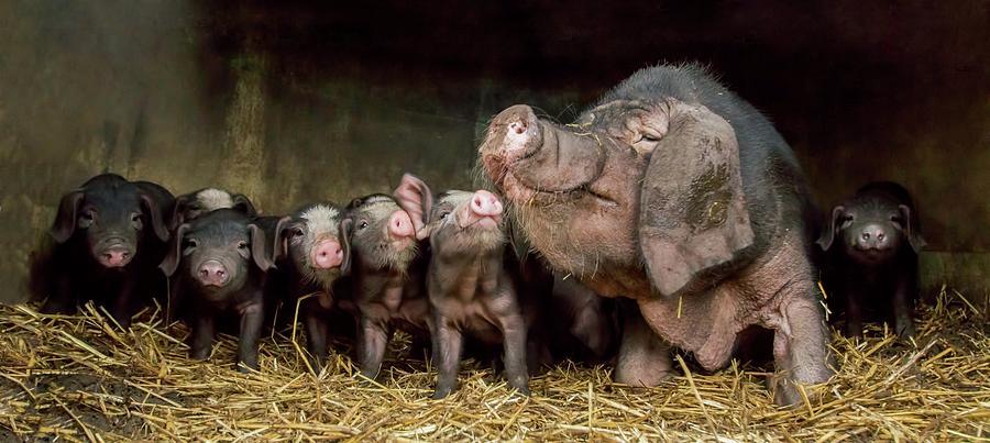 Family Photograph - The Wrinkled Ones by Gert Van Den