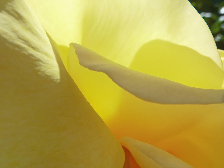 Petal Photograph - The Yellow Petal Mountains  by Steve Taylor