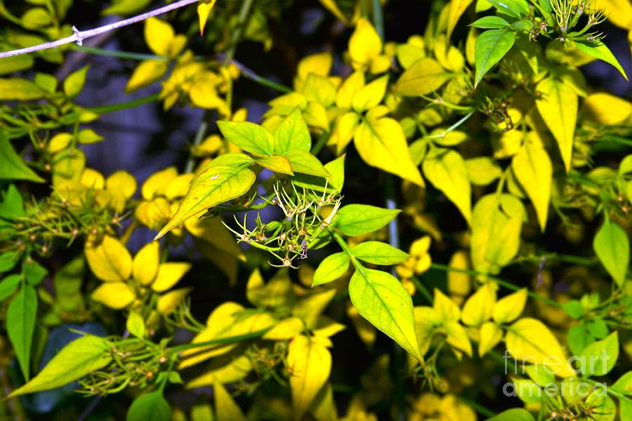 Yellow Photograph - The Yellow Plant by Aqil Jannaty