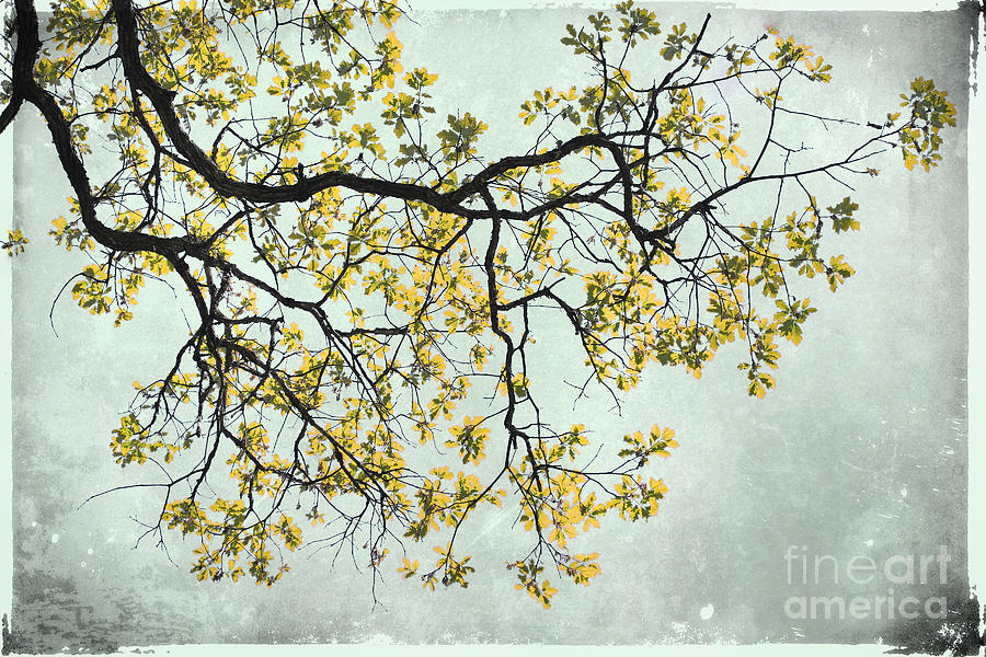 Yellow Photograph - The Yellow Tree by Sharon Coty