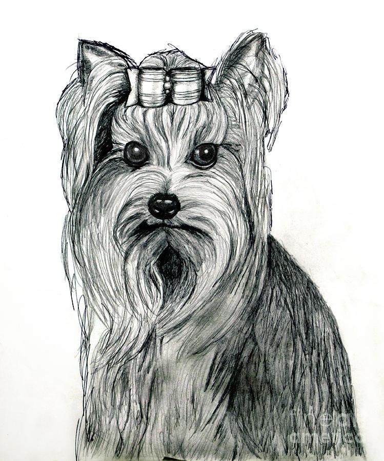 Нарисованные картинки йоркширский терьер