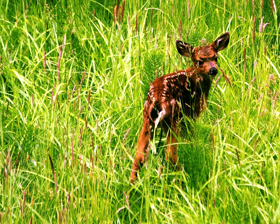 Deer Photograph - The Young Prince by Benjamin Yeager