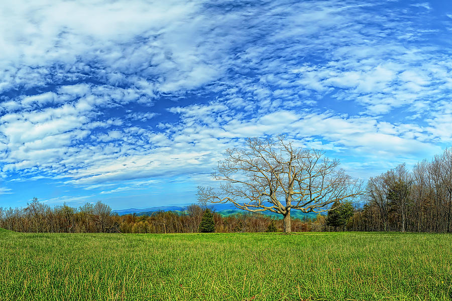 Metro Photograph - The Zen Meadow by Metro DC Photography