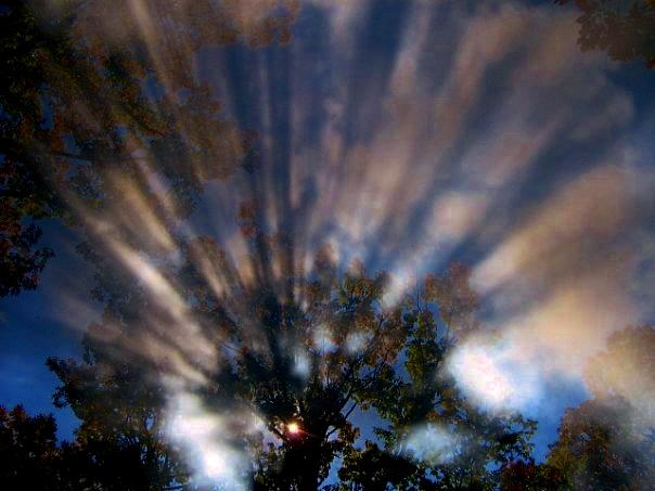 Tree Photograph - There Is A God by Sharon Costa