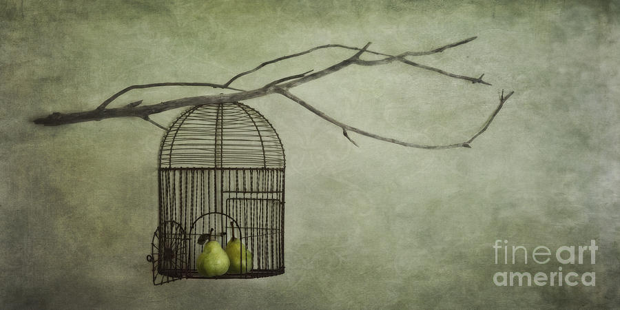 Pears Photograph - There Is A World Outside by Priska Wettstein