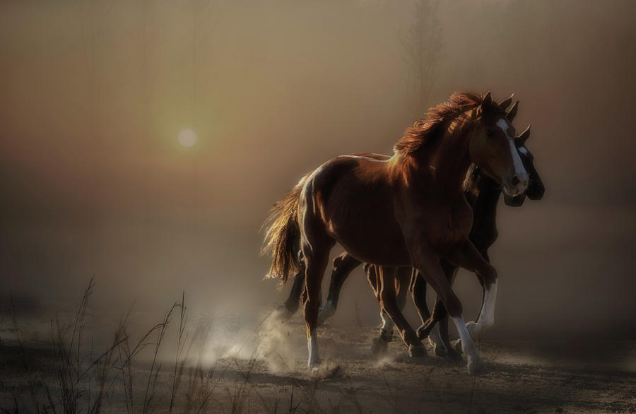 Horses Photograph - There Is Still Time To Change The Road Youre On... by Charlaine Gerber