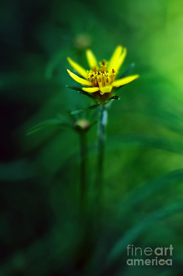Coreopsis Photograph - Theres A Secret World by Lois Bryan