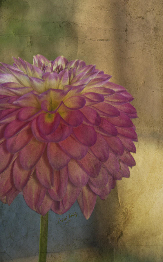 Flower Photograph - Theres Always Next Year by Trish Tritz