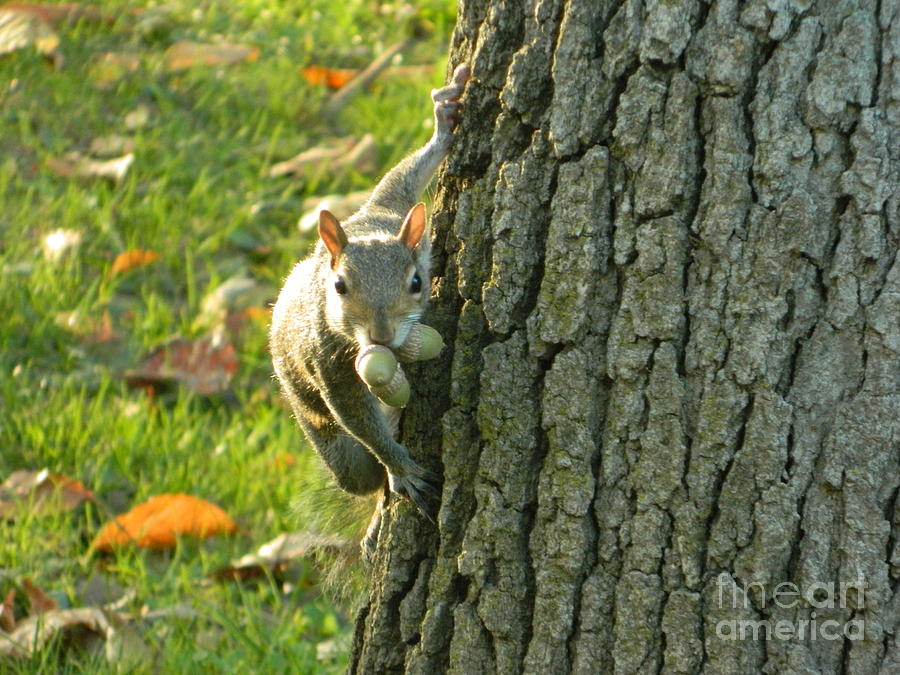 Squirrel Photograph - These Nuts Are All Mine by Emmy Vickers