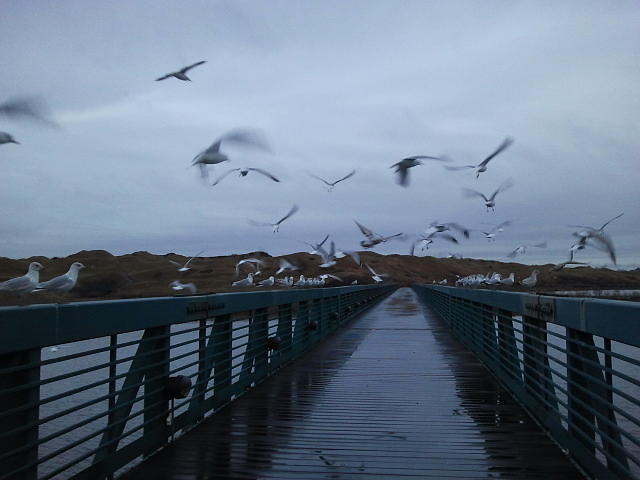 Seagulls Photograph - They Fly by Anastasia Konn