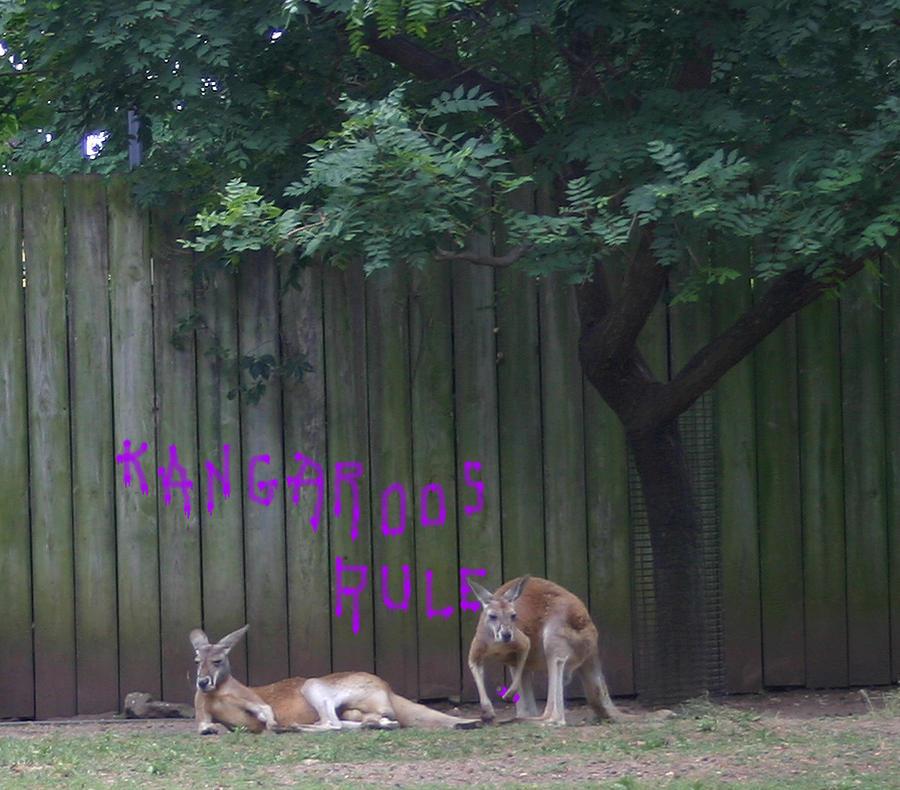 Kangaroo Photograph - They Will Never Think It Was Us.. by Nina Fosdick