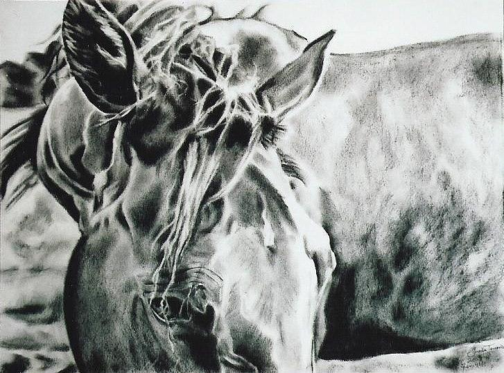 Charcoal Drawing - Things Were Sweeter In Tennessee by Shaila Yovan Tenorio