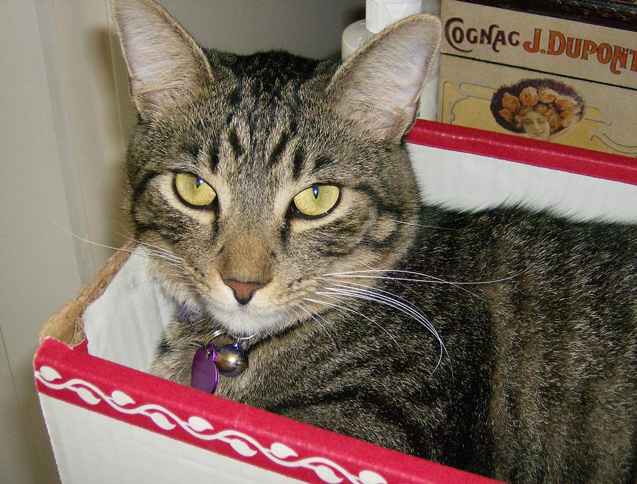 Cat Photograph - Think Inside The Box by Leslie Manley