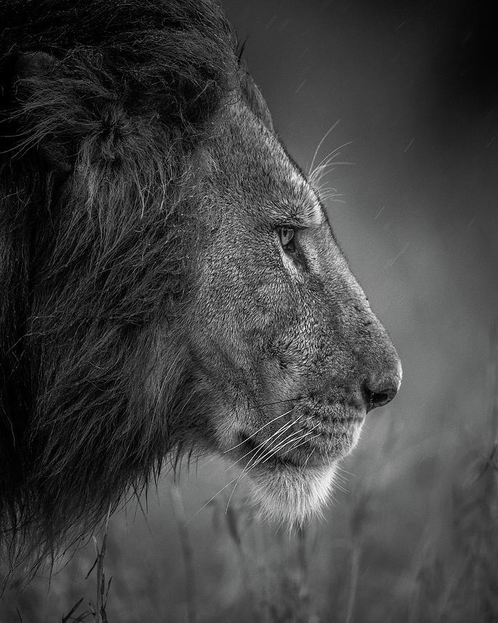 Wild Photograph - Thinking Under The Rain by Faisal Alnomas