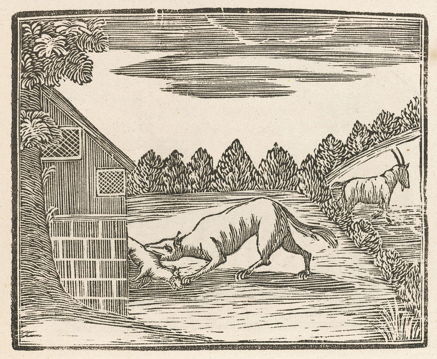 Dog Drawing - This Dog Has Grabbed The  Goats Kid by Mary Evans Picture Library