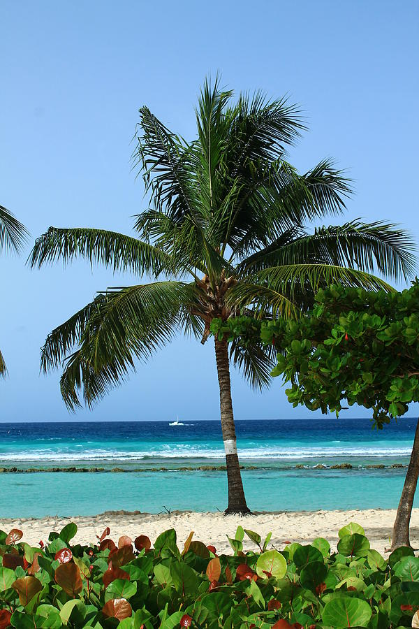 Barbados Photograph - This Is Living by Catie Canetti