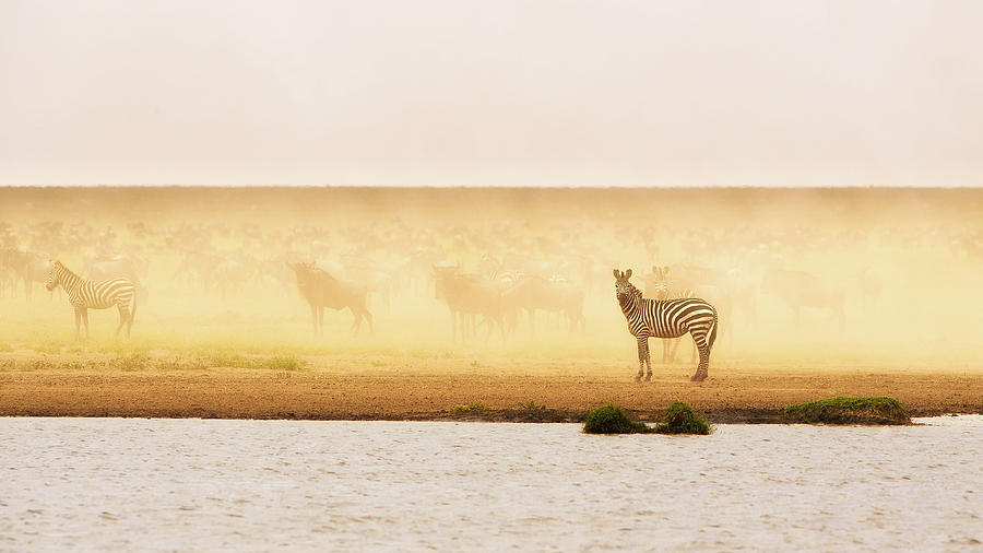 Panorama Photograph - This Is Ndutu by Mohammed Alnaser