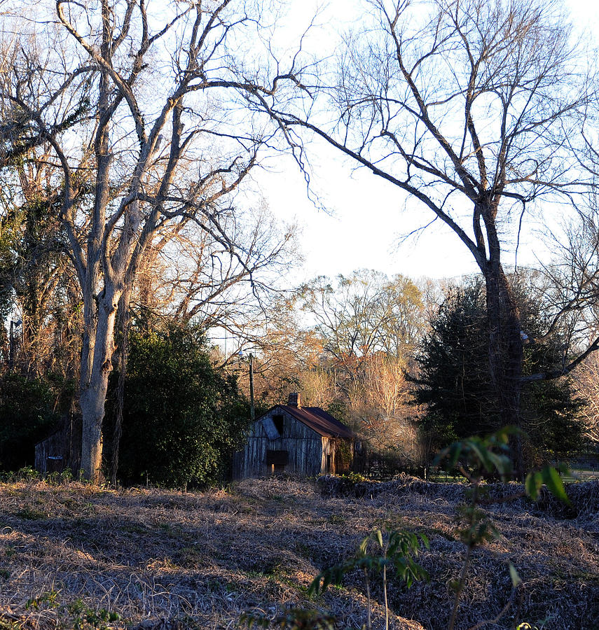 Woods Photograph - This Ole House by Leon Hollins III