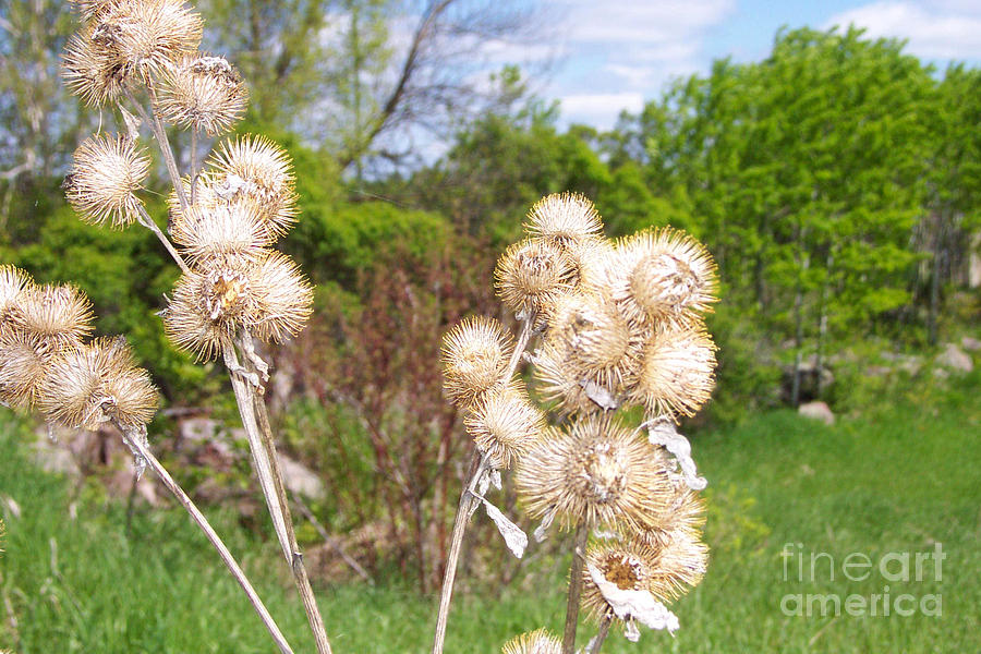 Thistle Photograph - Thistle Me This by Mary Mikawoz