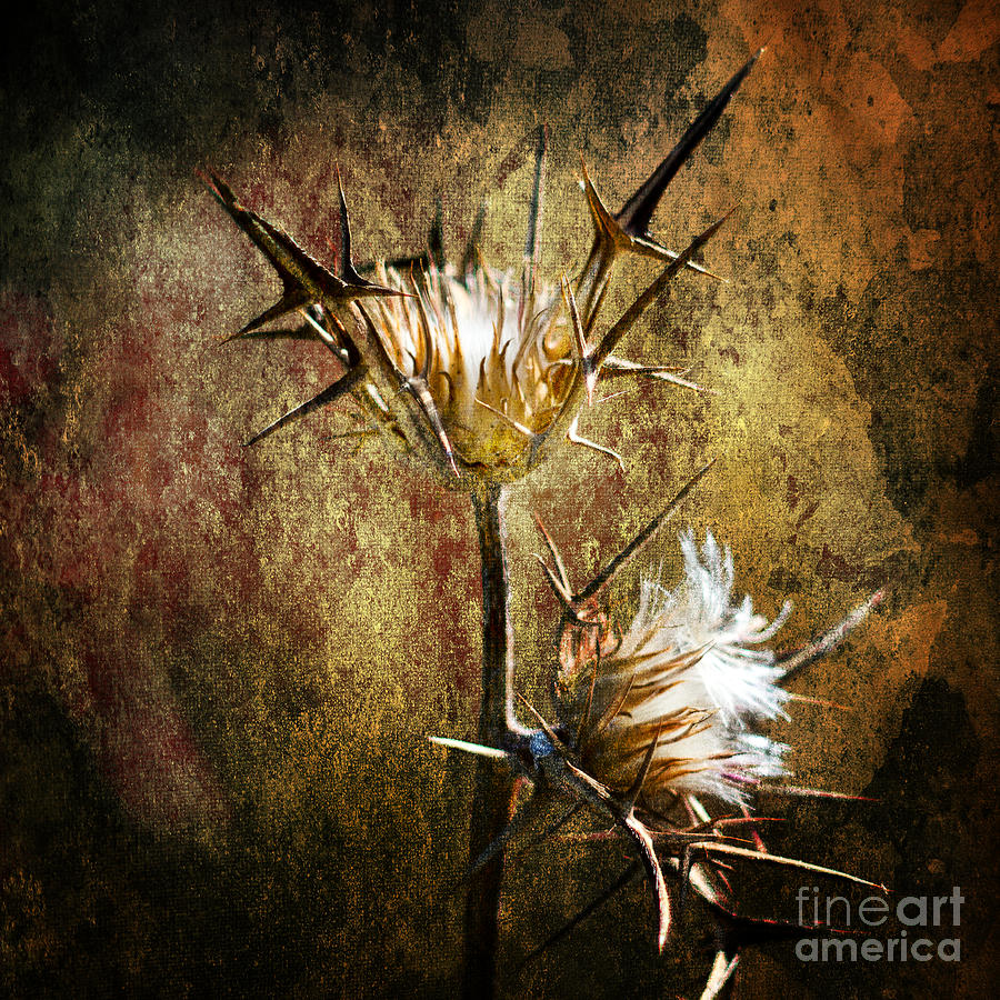 Background Photograph - Thorns by Stelios Kleanthous