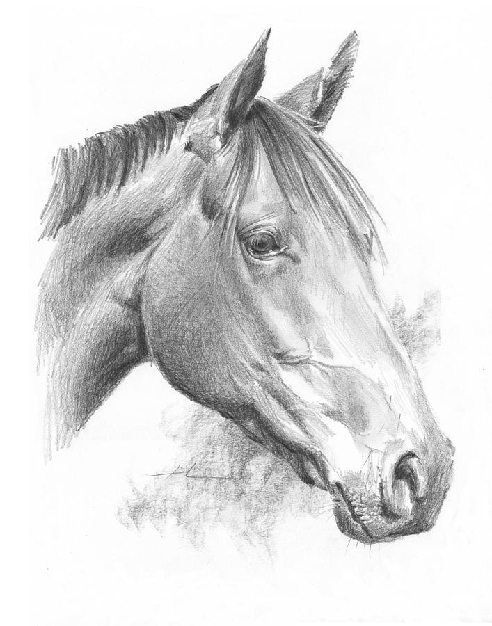 Thoroughbred Pencil Portrait Drawing by Mike Theuer