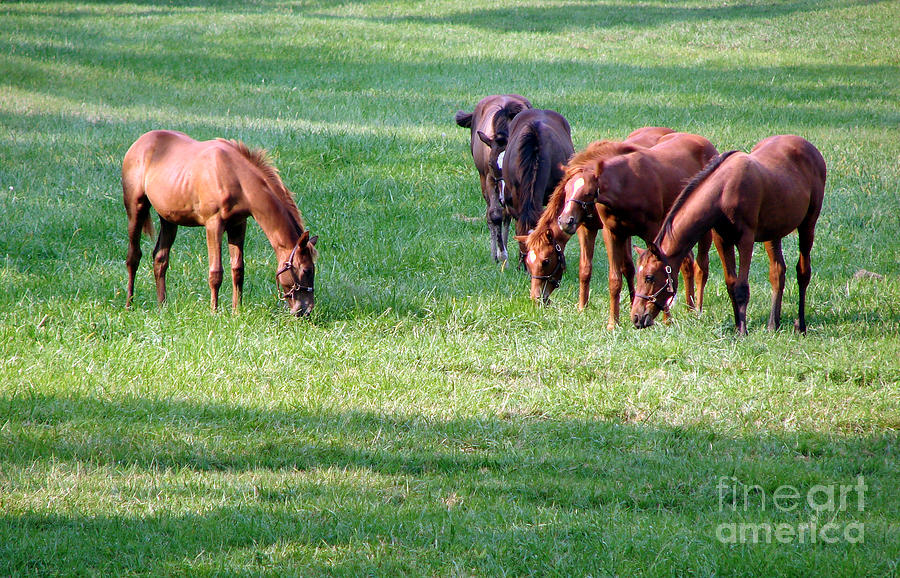 Horse Photograph - Thoroughbreds by Olivier Le Queinec