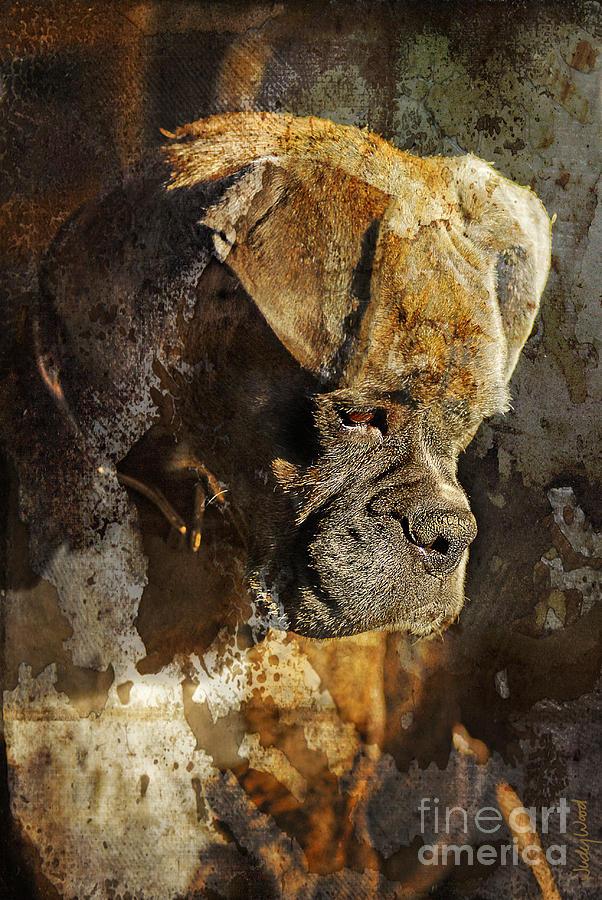 Dog Digital Art - Thought Process by Judy Wood