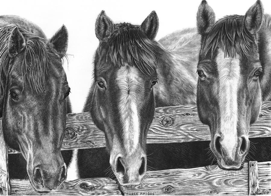 Horses Drawing - Three Amigos by Glen Powell