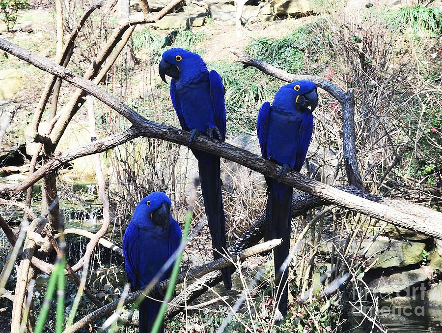 Blue Photograph - Three Amigos by Kathleen Struckle