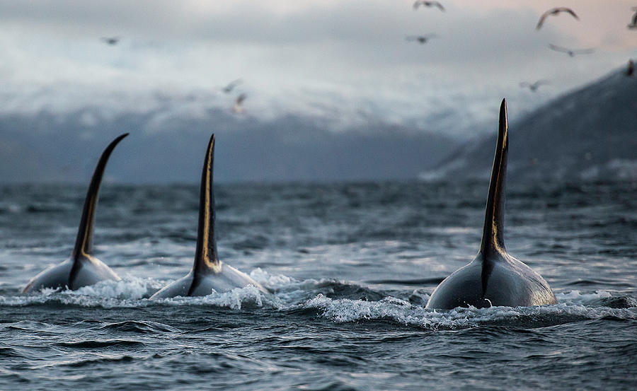 Three Boys Photograph by By Wildestanimal