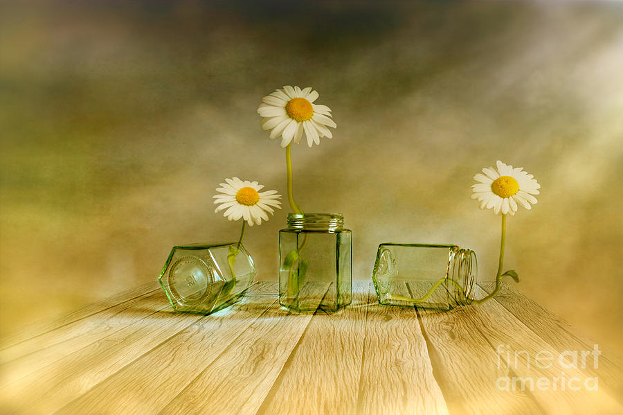 Artist Photograph - Three Daisies by Veikko Suikkanen