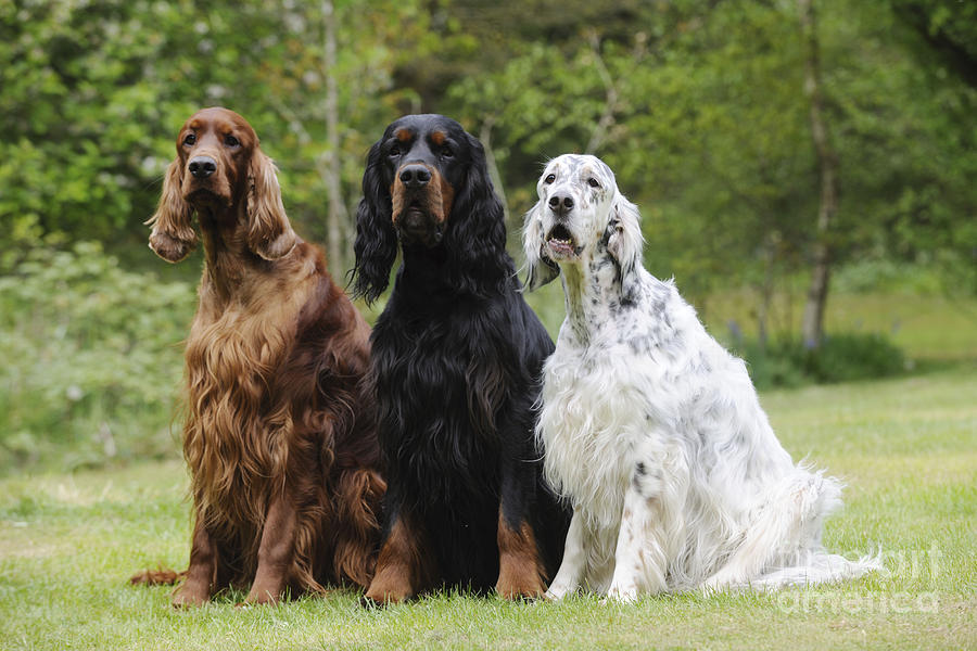 Large Inside Dogs
