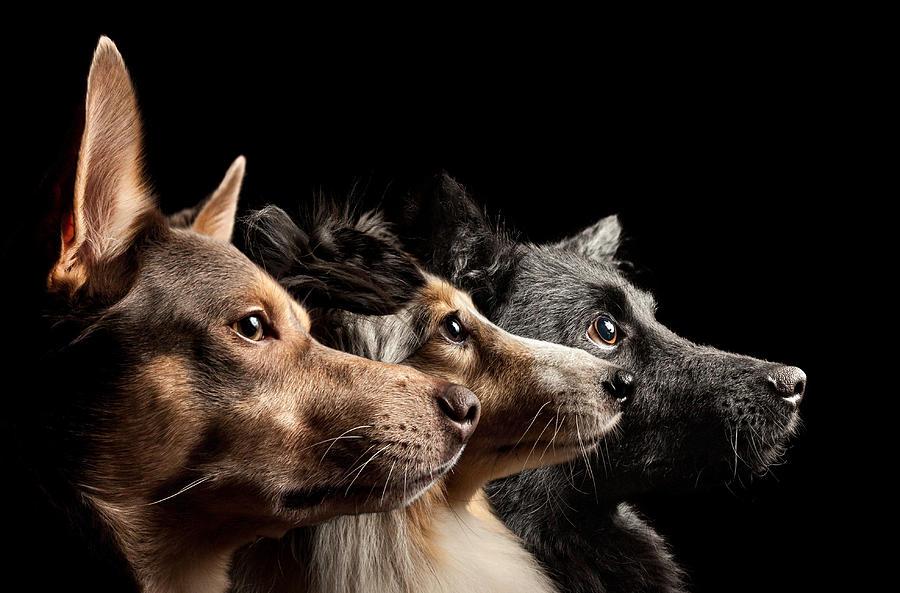 Three dogs looking up Photograph by Oszkár Dániel Gáti
