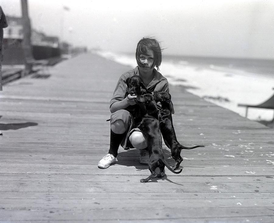 Three Dogs Photograph