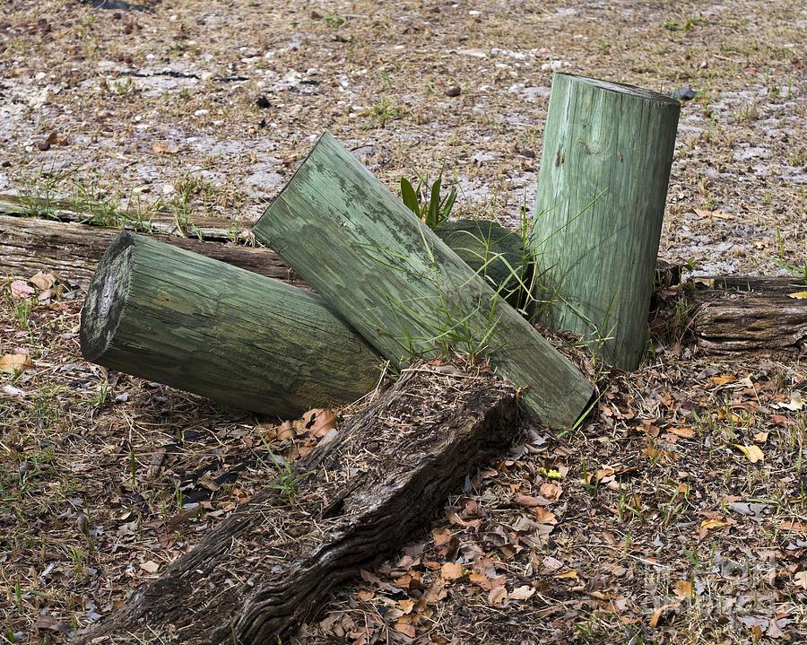 Three Photograph - Three Green Logs by Allan  Hughes
