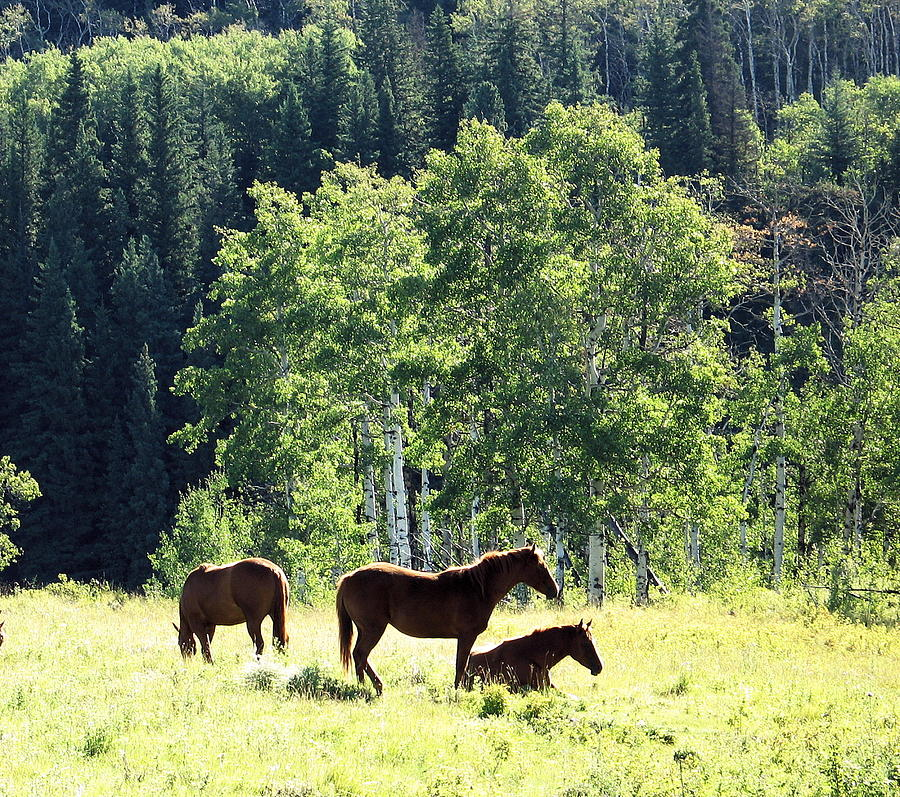 Fauna Photograph - Three Horses by Gerry Bates