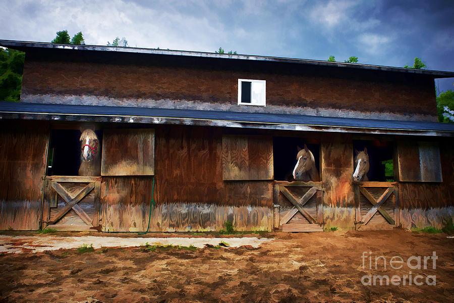 Horses Photograph - Three Horses In A Barn by Dan Friend