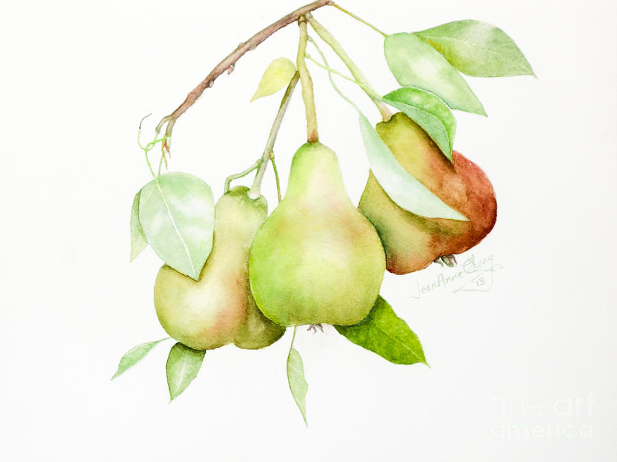Three Pears by Jean A Chang
