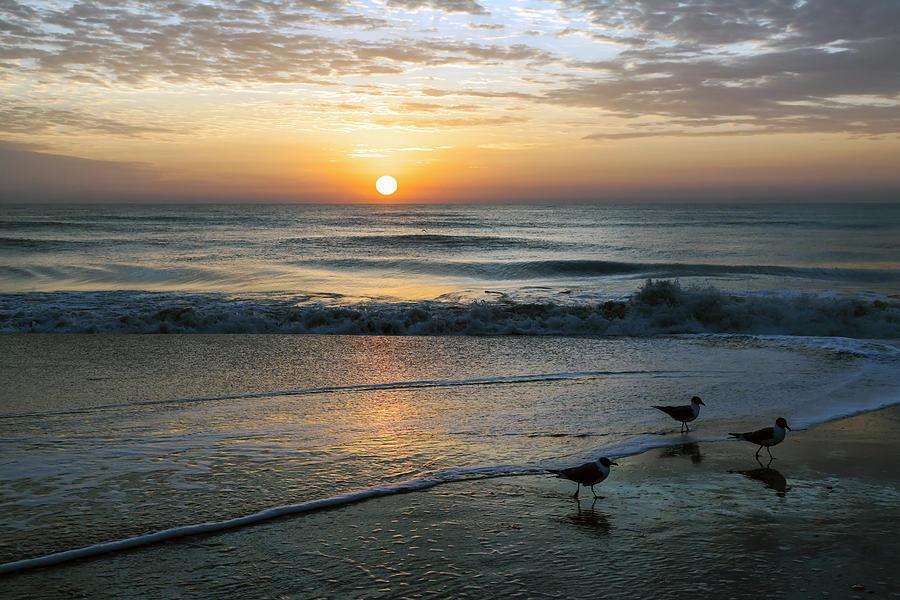 Three Seagulls Greet the Dawn by Lynn Palmer
