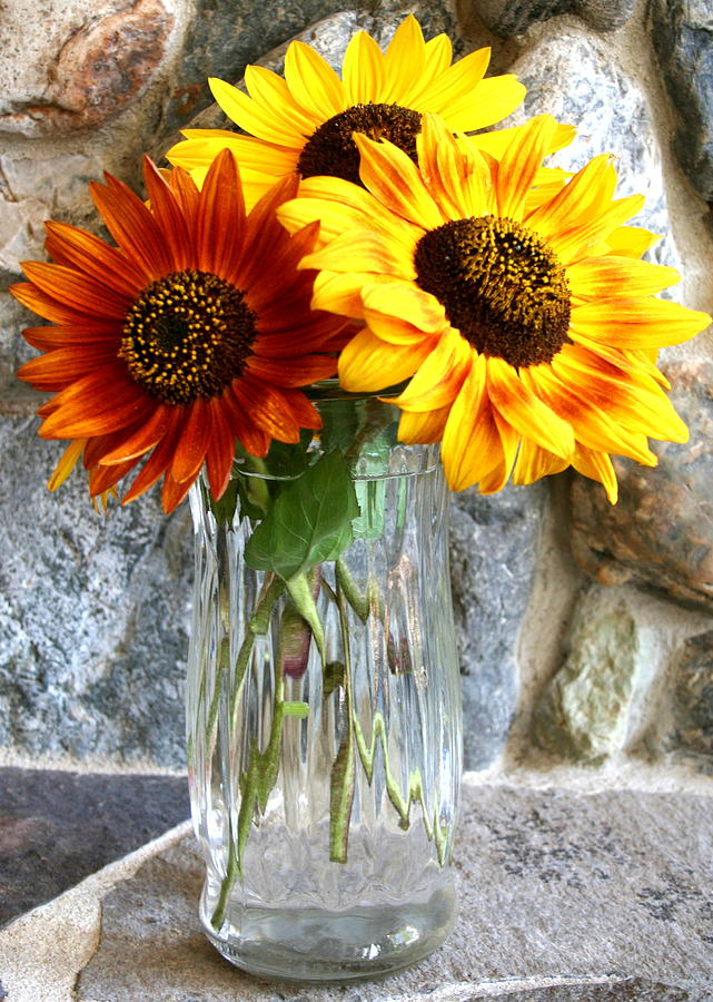 Three Sunflowers in a Vase Photograph by Laurel Talabere