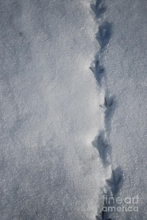 Three Toed Footsteps Photograph - Three Toed Steps by Susan Hernandez