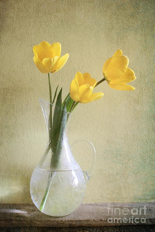 Tulips Photograph - Three Yellow Tulips by Diana Kraleva
