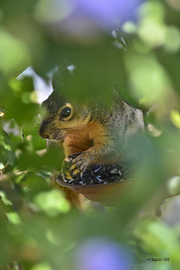 Squirrel Photograph - Through The Althea by Allen Sheffield