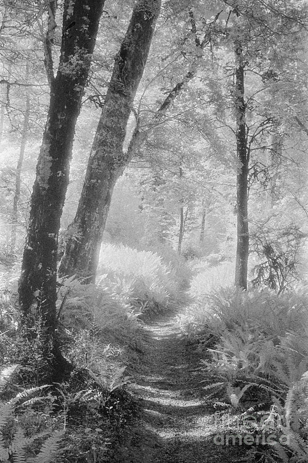 Black & White Photograph - Through The Bush by Colin and Linda McKie