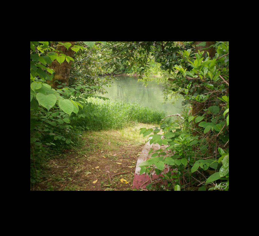 Forest Photograph - Through The Forest At Waters Edge by Absinthe Art By Michelle LeAnn Scott