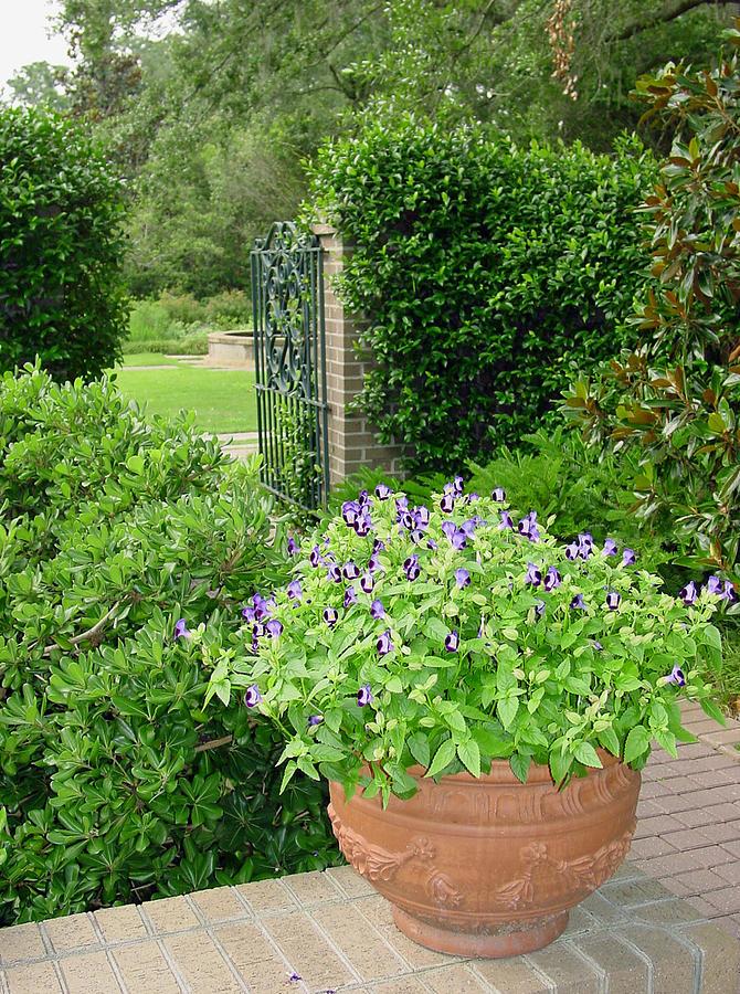 Garden Photograph - Through The Garden Gate by Suzanne Gaff
