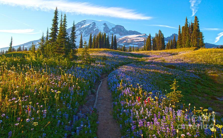 Rainier Photograph - Through The Golden Meadows by Mike Reid
